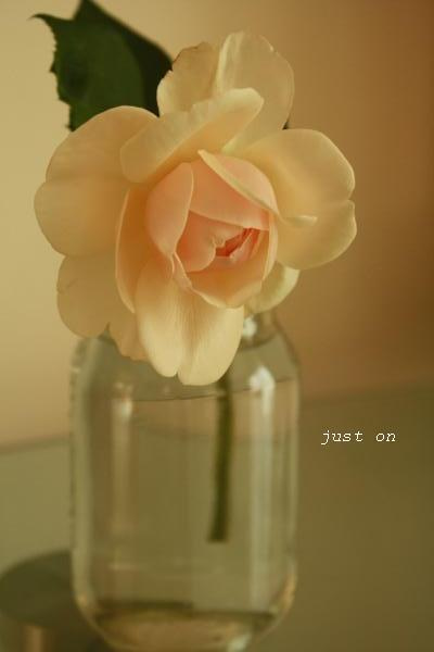 just on-今期最後のバラ