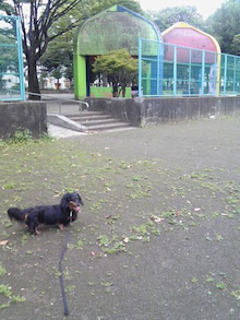 ちいさな庭 ~little Garden~