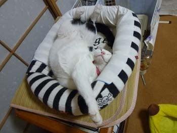 そらという猫-寝る子たち
