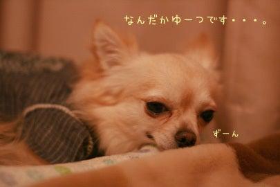 Chibi★Gang