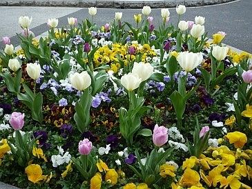 $わつぃの独りごと。-市役所前の花壇