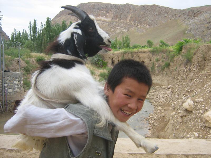 アフガニスタン便り-おんぶやぎ