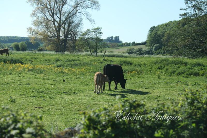 美しい国、英国のアンティーク&カントリーライフ-牛の親子