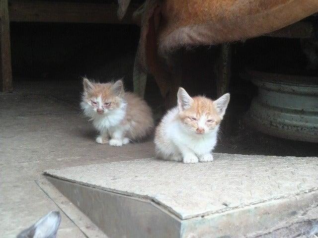 猫人-猫バス支援募集です!