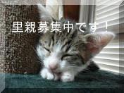 猫人-里親募集中!