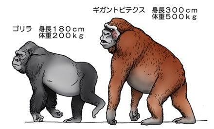 川崎悟司 オフィシャルブログ 古世界の住人 Powered by Ameba-ギガントピテクスとゴリラ