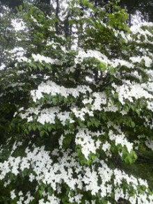 Kan-Kara-Rin-花で花でびっしりよ。