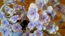 $花のイロハ