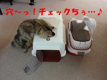 『長靴を…はいた猫』