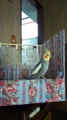 オカメインコのももちゃんと花教室と旅日記-100627_075744.jpg
