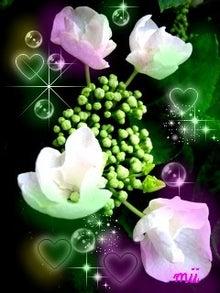 花の画像もある日記-アジサイ