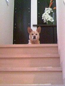 松江香史子ブログ「松江香史子の犬と笑顔日記」Powered by Ameba