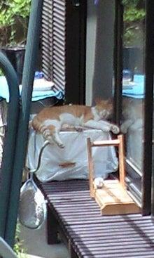 猫の気まぐれ日記INアメブロ-100628_1155~0001.jpg