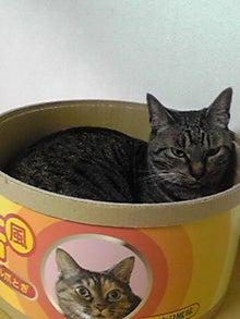 ずれずれブログ…湘南で猫と暮らせば…-100629_2049~02.JPG