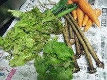 管理栄養士コーゲヨーコの「バランス喰楽部」脱カロリーで正しい食事指導教えます!-ima
