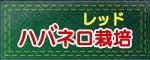 おいしい激辛.com ~激辛ハバネロ、激辛ブート・ジョロキアの栽培日記~-ハバネロ・レッド栽培