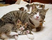 ダメリーマンかっすぃのダメブログ-癒し猫
