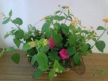 雀の茶店アメーバ店-DVC00018.jpg