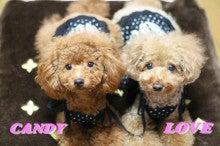 $ラブリ~☆ラブ☆-CANDY&LOVE
