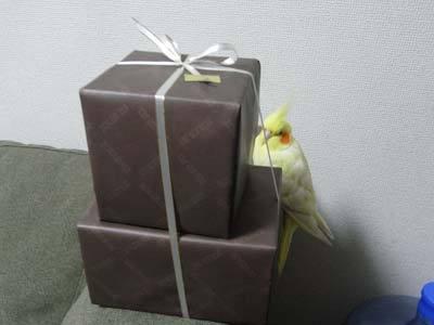 【たんぽぽの惑星】-プレゼント