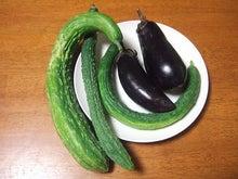 $だんだん×日常×アルバム。-野菜
