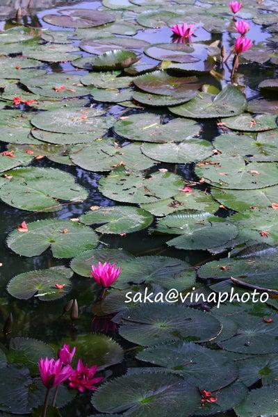 vinaphoto -ベトナム写真帳-