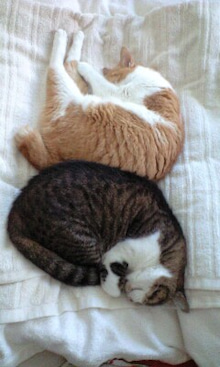 ずれずれブログ…湘南で猫と暮らせば…-100716_1312~0001.jpg