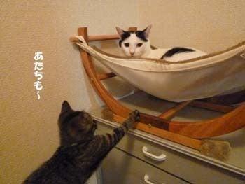そらという猫-2010・そら2歳