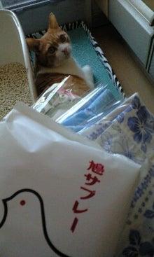 ずれずれブログ…湘南で猫と暮らせば…-100718_1035~0001.jpg