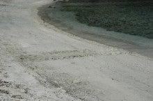 小笠原エコツアー 父島エコツアー         小笠原の旅情報と小笠原の自然を紹介します-境浦