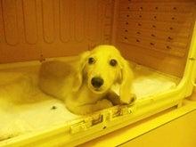 目指せ!!カリスマトリマ-@Dog&Cafe WITH-SBSH01801.JPG