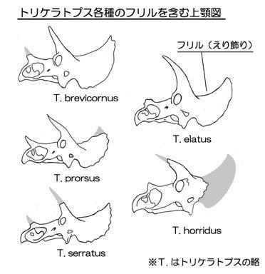 川崎悟司 オフィシャルブログ 古世界の住人 Powered by Ameba-トリケラトプス各種の頭骨図