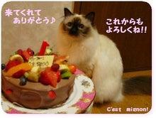 はろぉちぐ♪のブログ-ガトー誕生日ご訪問ありがとう