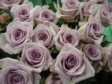 今日のバラ-M-トワイライトブルー