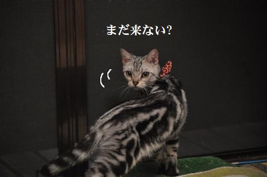メルのにくきゅ~ぷにぷに日記