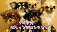 $くろむ☆ROCKSTAR