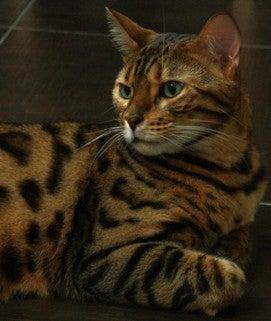 グルメな猫に招かれて in 香港