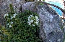 小笠原エコツアー 父島エコツアー         小笠原の旅情報と小笠原の自然を紹介します-ボッス