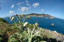 小笠原エコツアー 父島エコツアー         小笠原の旅情報と小笠原の自然を紹介します-アザミ