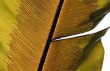 小笠原エコツアー 父島エコツアー         小笠原の旅情報と小笠原の自然を紹介します-タニワタリ