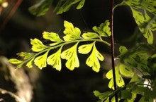 小笠原エコツアー 父島エコツアー         小笠原の旅情報と小笠原の自然を紹介します-ホラシノブ