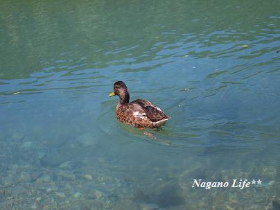 Nagano Life**-かも