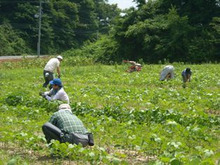 福島県在住ライターが綴る あんなこと こんなこと-農学校100725-1