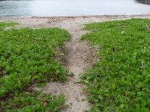 小笠原エコツアー 父島エコツアー         小笠原の旅情報と小笠原の自然を紹介します-カメ跡