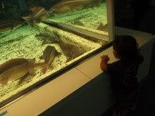 OFFSHORE CRAZY!-水族館