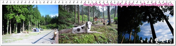 心優しい犬の癒し♪ ~Hearty&Resty♪...feat.Nera&Azully&Curary&Presea&Raphael♪~ from 滋賀びわ湖~