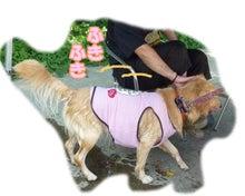 犬っちのブログ-koharu14