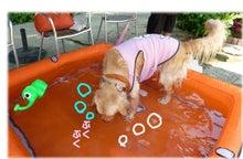 犬っちのブログ-koharu10