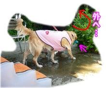 犬っちのブログ-koharu13
