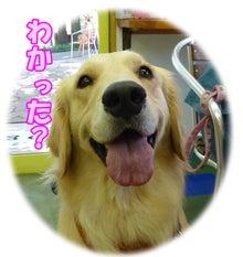 犬っちのブログ-koharu6